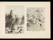 The illustrated catalogue of Japanese fine art exhibits in the Art Palace at the Louisiana Purchase Exposition, St. Louis, Mo., U.S.A.