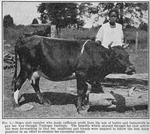 Negro club member who made sufficient profit from the sale of butter and buttermilk to pay her way through Tuskegee Institute; The benefits which accrued through her club activities were far-reaching in that her neighbors and friends were inspired to follow the best dairy practices in an effort to emulate her successful results