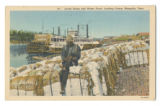 Levee scene and water front, loading cotton, Memphis, Tenn