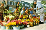 The Franklin Street Flower Ladies