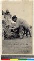 Woman preparing oysters at summer resort near Haizhou, Jiangsu, China, 1923