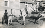 Howard Orphanage and Industrial School children learning how to work with horse-drawn carriages on farms