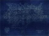 Talmage Family Tree blueprint, 1930