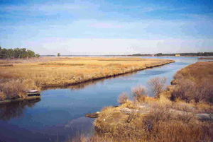 Harriet Tubman Underground Railroad Byway - Yellow Grass and Blue Water at Stewart's Canal