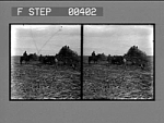 Loading the cane for the mill on a plantation near New Orleans, La. [Active no. 810. Stereo photonegative.]