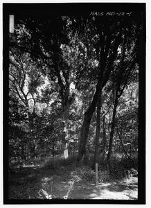 Worthington Farm White Oaks, Worthington Farm, Northwest base of Brooks Hill , Frederick, Frederick County, MD