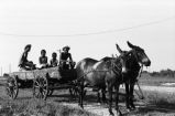 Good Negatives: Centreville, Miss. Chapman Home, house interior, Don Stuart, Strawberry Roberson. Children with wagon and mules, mules plowing, woman hoeing (GNP C-68 #594)