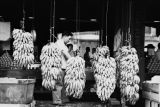 Jasper Wood Collection: Bananas hanging in market