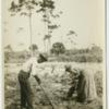 Black couple clearing palmetto scrub for a garden