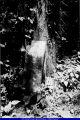 Atkinson Cemetery 2002